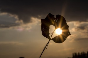sun-heart-autumn-leaf-39379